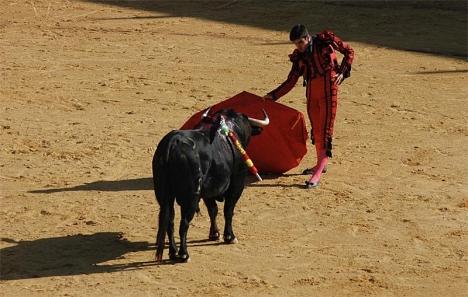 Ingen politiker hade hittills gått så långt som att efterlysa en omröstning om tjurfäktningens framtid.
