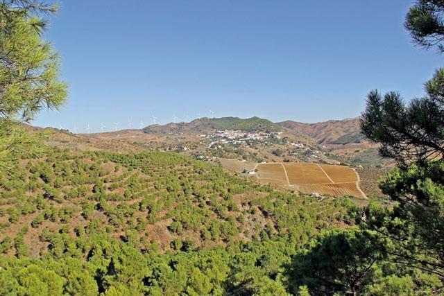Finca Solmark är en gård införskaffad i mars 2018, med både gamla olivträd och nyplanterade avokadoträd, mellan de två naturområdena Sierra de las Nieves och Sierra de Aguas.