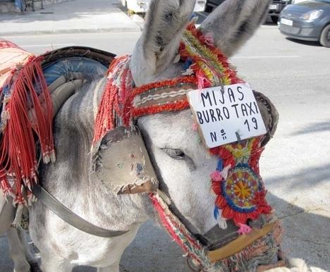 Representanter för åsnetaxi i Mijas hotar att stämma djurrättspartiet PACMA för förtal.