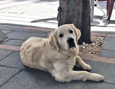 Hundägare i Benalmádena kan tvingas medtaga rengöringsutrustning vid promenader på stan.