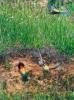 BIÄTARE. De vackra fåglarna bygger gärna bon i hålor längs floden.