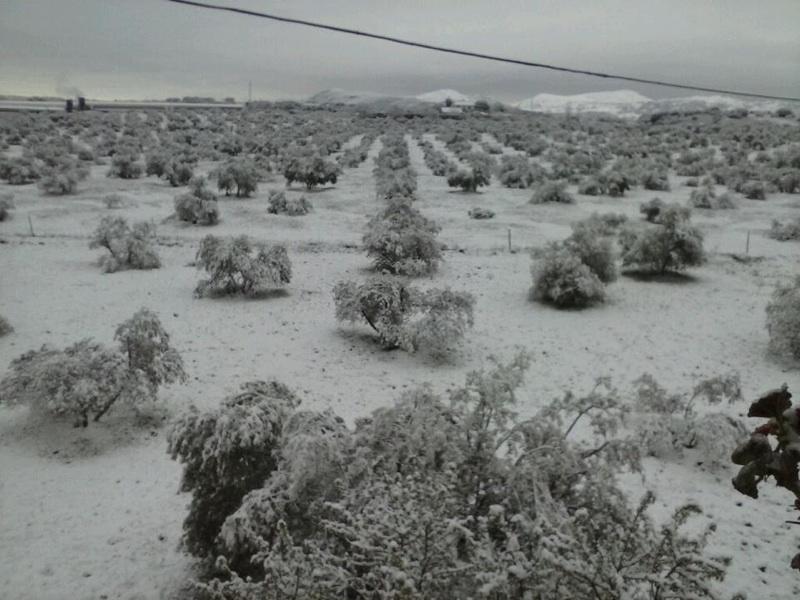 Som vanligt kommer de lägsta temperaturerna att registreras bland annat i trakterna av Ronda, även om risken för nederbörd uppges vara låg. ARKIVBILD