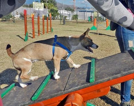 Antalet hundparker på Costa del Sol blir allt större.