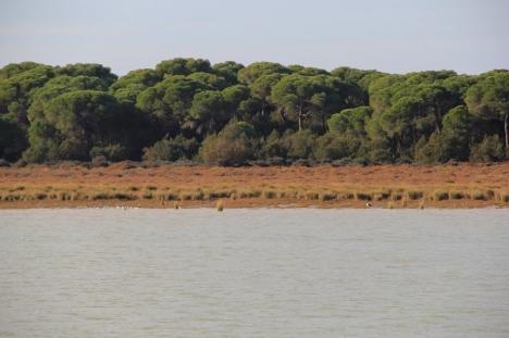 Coto de Doñana är ett av Spaniens viktigaste fågelreservat.
