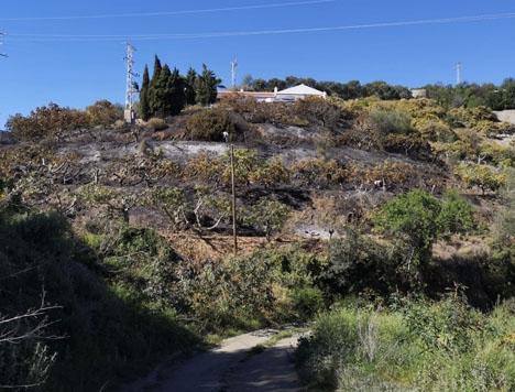 Branden nära Cerro Gordo omfattade omkring 2 000 kvadratmeter odlingar. Foto: Ayto de Almuñécar