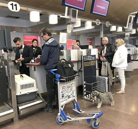 Nu accepterar även Norwegian husdjur ombord.