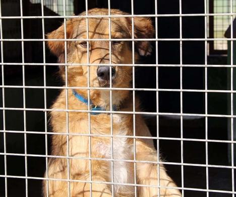 Hundratals hundar och katter måste avlivas om Triple A tvingas stänga.