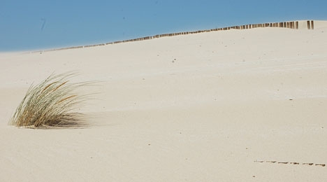 Om den nuvarande tendensen består kommer temperaturerna i Málagaprovinsen att bli som de i dagsläget i Centralafrika.