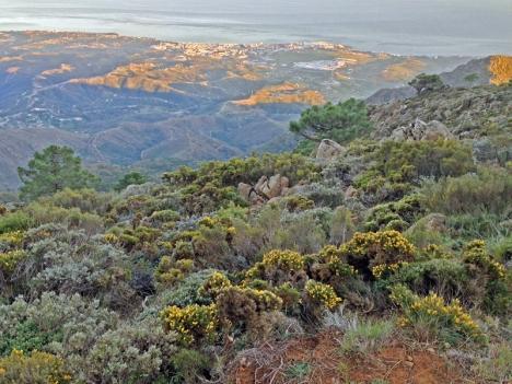Los Reales de Sierra Bermeja ligger på mer än tusen meters höjd över havet, som man har för sina fötter med en hänförande utsikt ovanför Estepona.