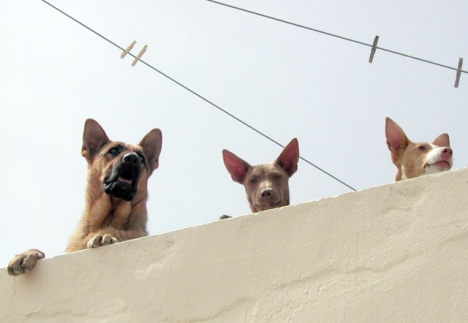 Tingsrätten i Estepona finner det styrkt att ägaren lämnat sin hund utan tillsyn under flera dagar. ARKIVBILD