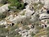 De vanligaste vilda djuren här är bergsgetter, men det finns också ett flertal fågelarter som gåsgam och kungsörn.