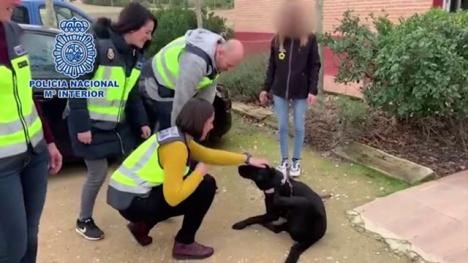 Pocahontas har hittats välbehållen och väntas få träffa sin nya ägare inom en månad. Foto: Policía Nacional