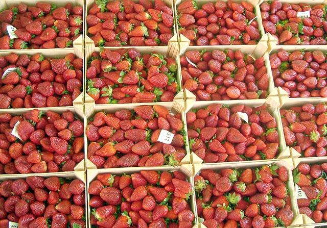 Gästarbetarna i Huelva plockar inte minst jordgubbar. Foto: Juan Emilio Prades Bel/Wikimedia Commons
