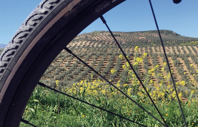 Jaén inrymmer världens största olivodlingar, som är en fröjd att uppleva på cykel. Olika paket finns att köpa från två dagar och uppåt.