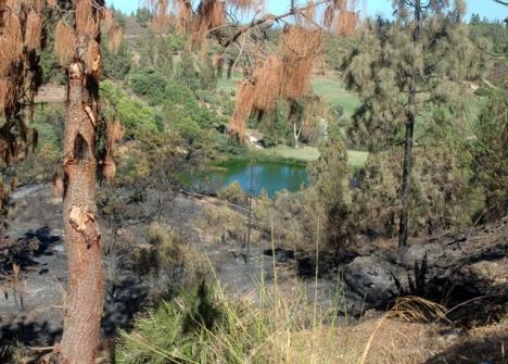 Många av naturbränderna uppstår på grund av ovarsamhet.