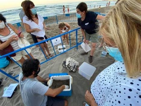 Området vid stranden i Los Boliches har skärmats av och experter ska besluta om äggen flyttas till annan plats. Foto: Ayto de Fuengirola