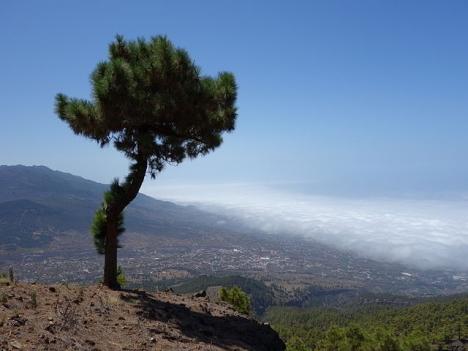 Värmeböljan kommer just som bland annat La Palma lidit en svår naturbrand. Foto: Tanja Freibott/Wikimedia Commons ARKIVBILD