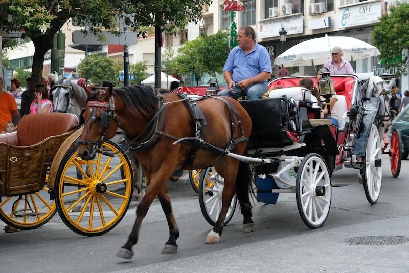 Nedräkningen har börjat. Marbella kommun planerar att under en treårsperiod återkalla licenserna för stadens hästdroskor.
