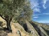 Vandringen från Canillas de Aceituno till bron över Almachares går mestadels längs bergskammen, med hänförande vyer från mer än 700 meters höjd över havet.