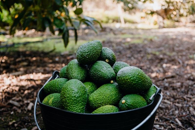 Subtropiska frukter som avokado, olivolja och kött är några av de produkter som exporteras från Málagaprovinsen till utlandet.
