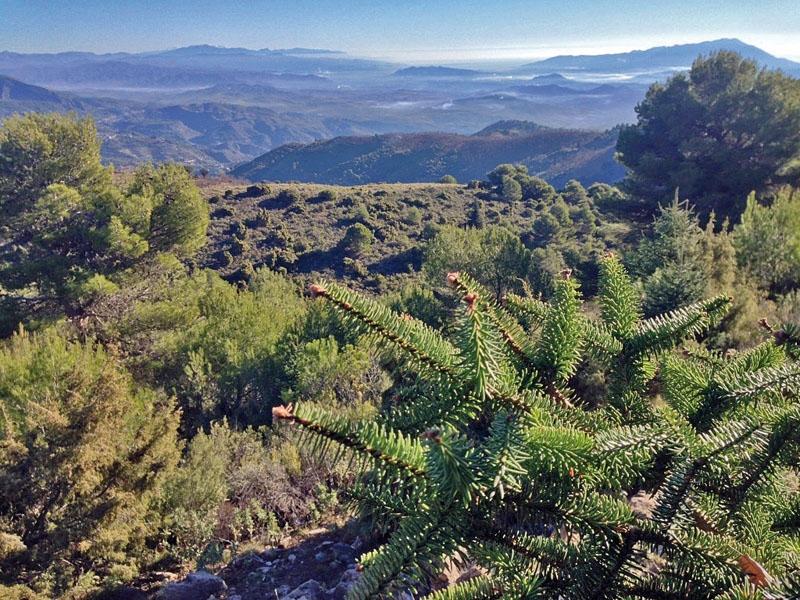 Sierra de las Nieves erbjuder en mängd olika vandringsleder med säregen och omväxlande natur. Detta är den unika spanskgranens förlovade hemtrakter.
