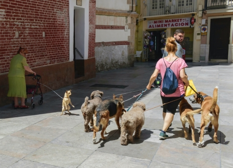 Allt fler Málagabor skaffar hund. Enligt sociologerna beror det på att fler bor ensamma i dagens samhälle.