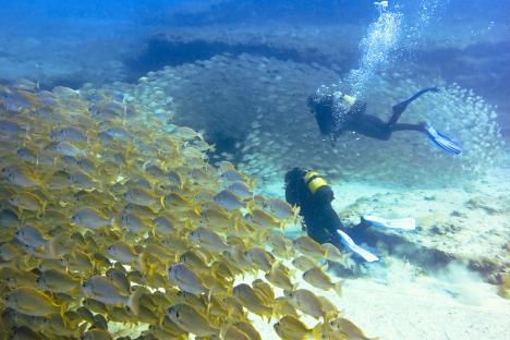 I Spanien finns några av Europas bästa dykplatser, med flera marina naturreservat och spännande vrak att utforska. Bilden är tagen utanför Gran Canaria.
