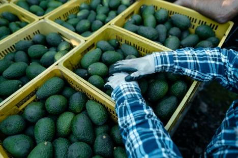 De utländska marknaderna efterfrågar framför allt subtropiska frukter, olivolja och kött.
