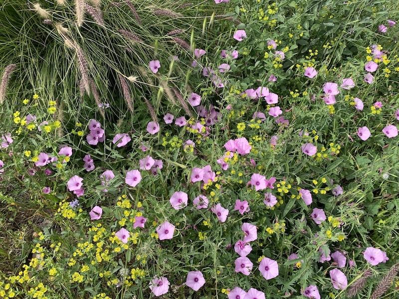 Den spanska våren kan visserligen spritta i kroppen, men precis som svensk höst är en slags död, sker samma sak här i takt med att vi närmar oss sommaren.