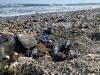 Strandbesökarna i Benalmádena blev minst sagt förbryllade över vad som lätt kan förväxlas med den giftiga blåsmaneten.