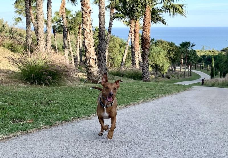 Det är verkligen en svårslagen känsla med en hund som kommer i full fart när man ropar på den. Och som visar genuin livsglädje bara för att den får lov att springa fritt en stund.