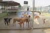 Under pandemin har djuren lämnats i sämre skick än tidigare, för att ägarna inte haft råd att ta dem till veterinär.