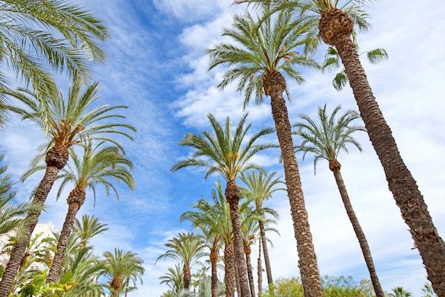 Endast 2015 har det registrerats högre temperatur i maj i Alicante stad, än på söndagen 16 maj.