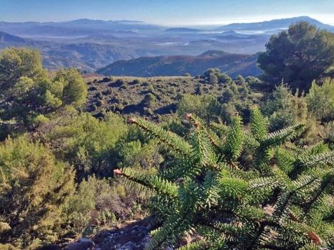 Sista steget är taget för att Sierra de las Nieves nu ska betraktas som nationalpark med maximalt miljöskydd.