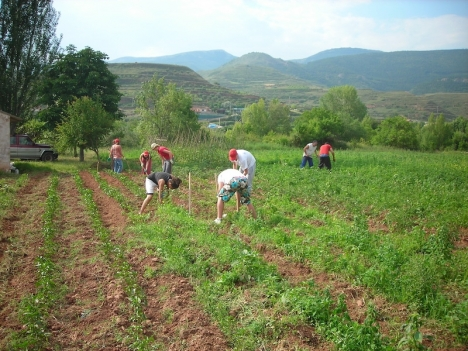 Migranter som har svarta jobb ska få det lättare att legalisera sin situation i Spanien. Foto: Ministerio de Agricultura