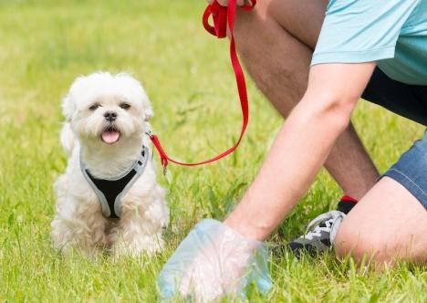 Hundägare i Benalmádena som inte plockar upp efter sina hundar riskerar böter, även om de inte blir tagna på bar gärning.