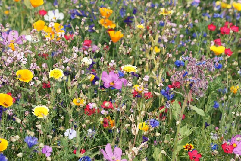 Veckans ämne får kompenseras med en blomsteräng.
