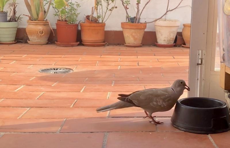 Fågelskådning i min tvättstuga.