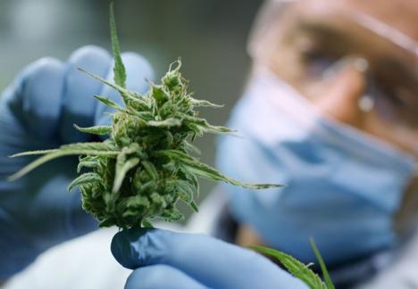 Ett 70-tal länder tillåter redan konsumtion av cannabis i behandlingssyfte och tre partier med representation i det spanska parlamentet vill legalisera det helt.