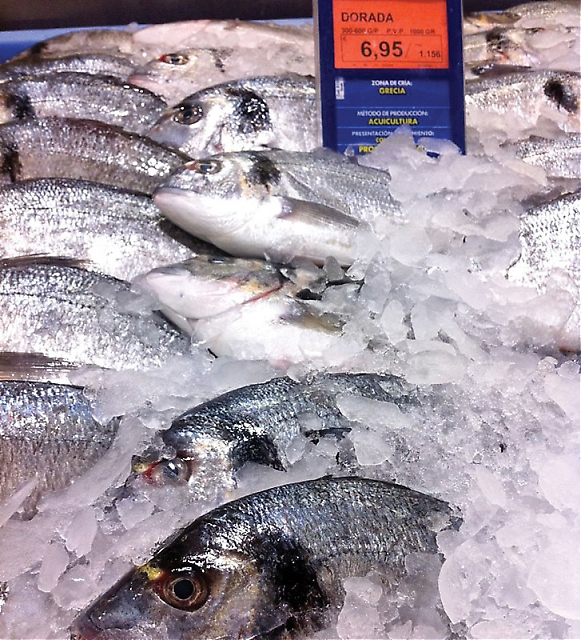 """På senare år har två fisksorter tagit täten som de mest populära, jämte de traditionella sardinerna och boquerones. Det är dels """"lubina"""" (bass) och """"dorada"""" (dorado)."""