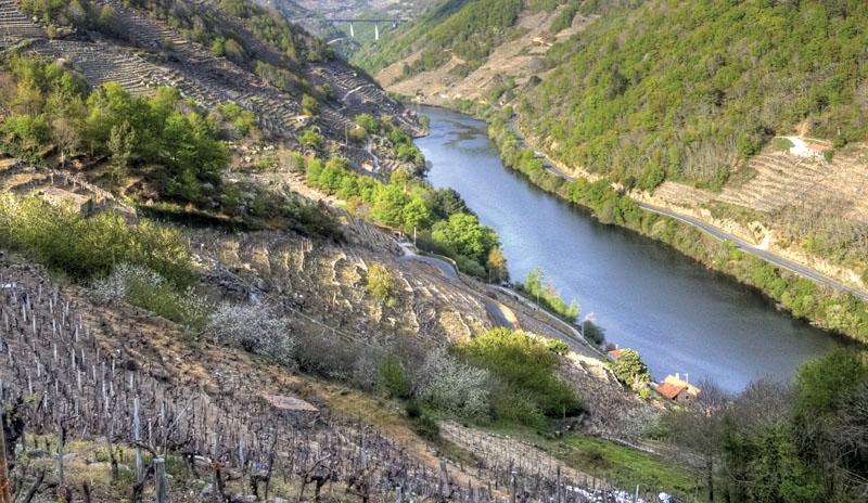 Vinturismen i Galicien steg förra året med 40 procent fler besökare. Det är inte bara det mest kända området Rias Baixas som lockar, utan även nästan okända distrikt i inlandet.