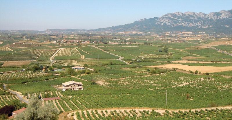 I slutet på förra seklet upplevde La Rioja ett nytt uppsving, med ett flertal nya bodegor som grundlade en ny skola, helt annorlunda från den tidigare och minst lika bra.